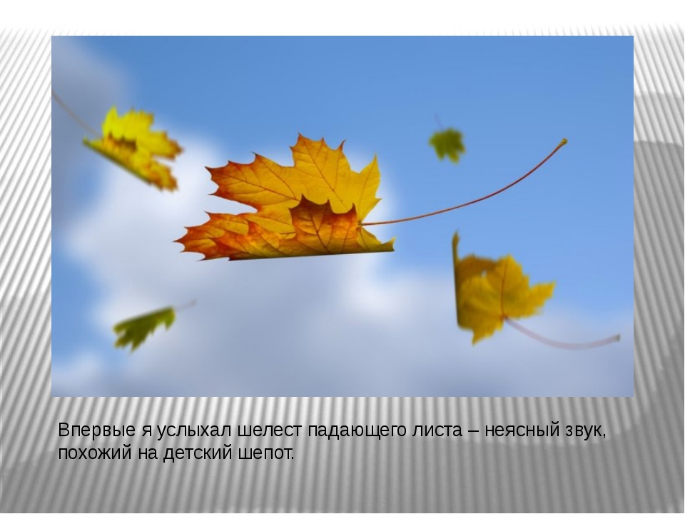Впервые я услыхал шелест падающего листа – неясный звук, похожий на детский ш...
