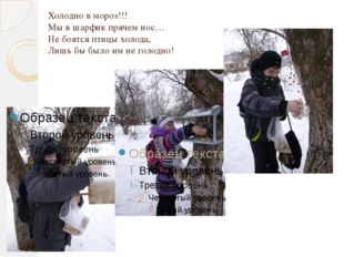 Холодно в мороз!!! Мы в шарфик прячем нос… Не боятся птицы холода, Лишь бы бы