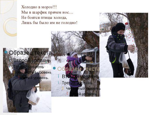Холодно в мороз!!! Мы в шарфик прячем нос… Не боятся птицы холода, Лишь бы бы...