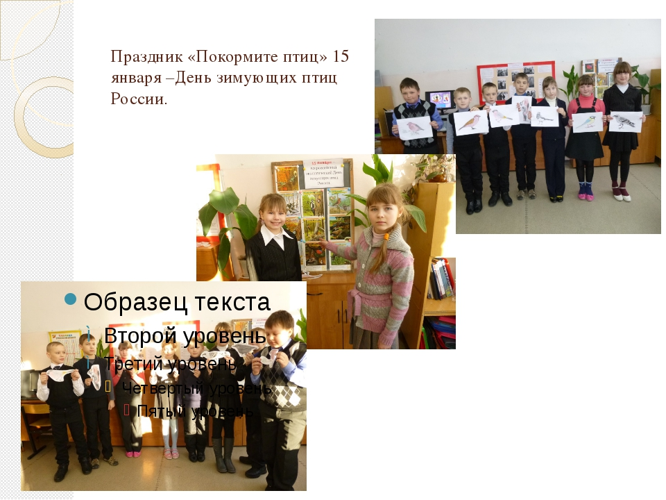 Праздник «Покормите птиц» 15 января –День зимующих птиц России.