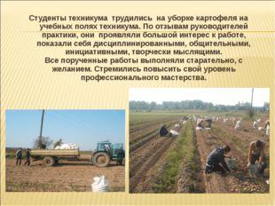 Студенты техникума трудились на уборке картофеля на учебных полях техникума