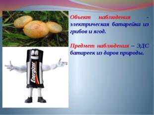 Объект наблюдения - электрическая батарейка из грибов и ягод. Предмет наблюде