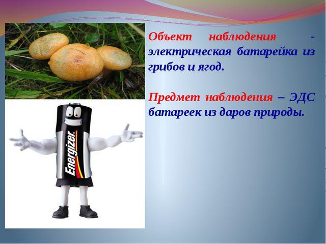 Объект наблюдения - электрическая батарейка из грибов и ягод. Предмет наблюде...