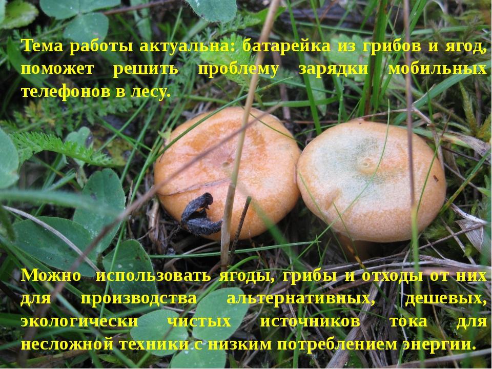 Тема работы актуальна: батарейка из грибов и ягод, поможет решить проблему за...