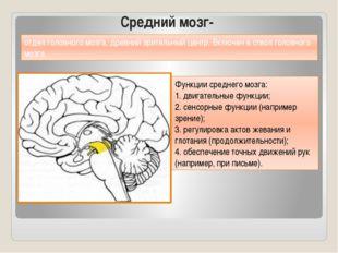 Средний мозг- Функции среднего мозга: 1. двигательные функции; 2. сенсорные ф