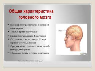Общая характеристика головного мозга Головной мозг расположен в мозговой час