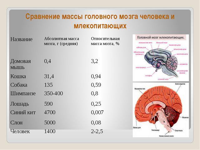 Сравнение массы головного мозга человека и млекопитающих Название Абсолютная...