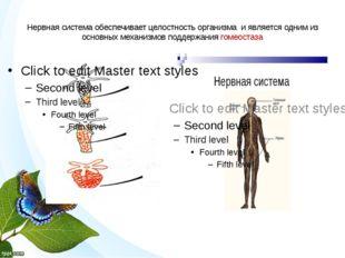 Нервная система обеспечивает целостность организма и является одним из основн