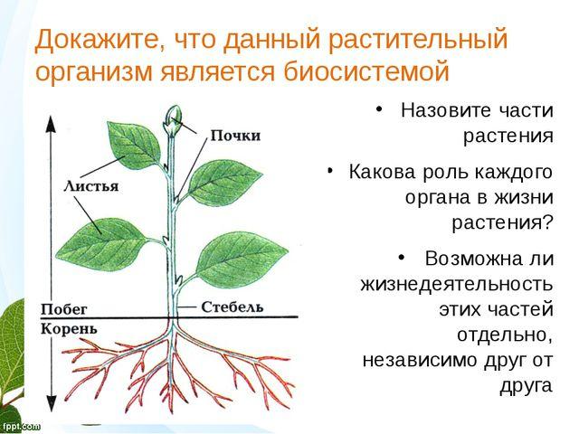 Докажите, что данный растительный организм является биосистемой Product A Fea...
