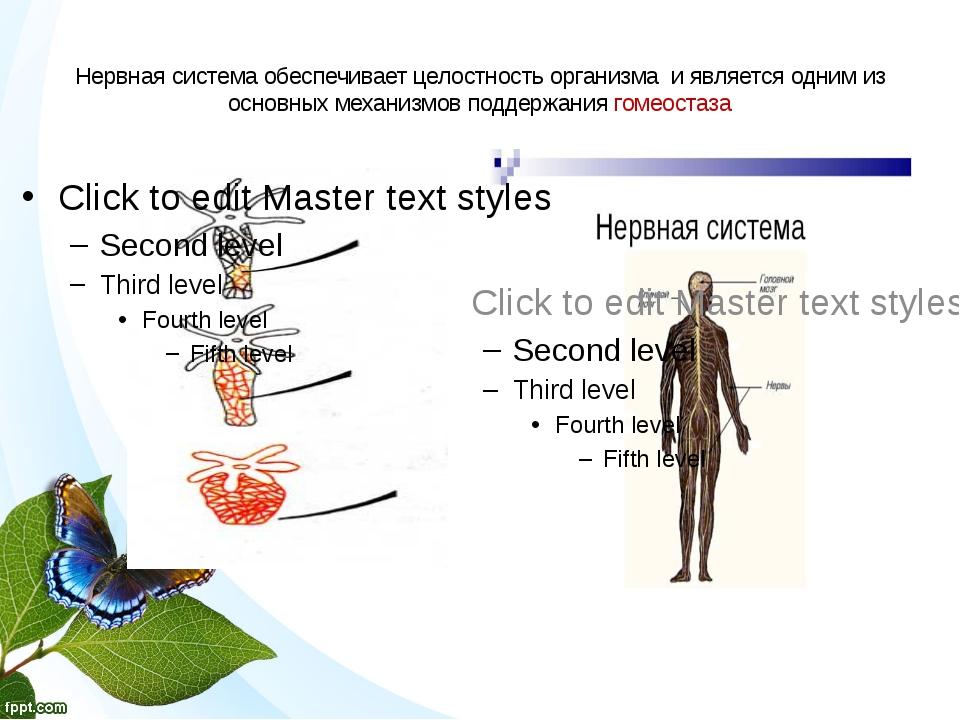 Нервная система обеспечивает целостность организма и является одним из основн...