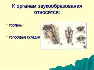 К органам звукообразования относятся: гортань; голосовые складки.