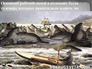 Основной рабочей силой в колониях были туземцы, которых принуждали ходить на