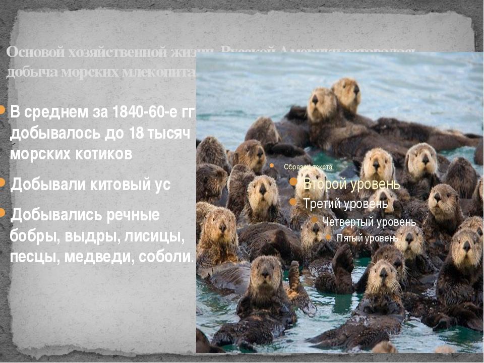 Основой хозяйственной жизни Русской Америки оставалась добыча морских млекопи...