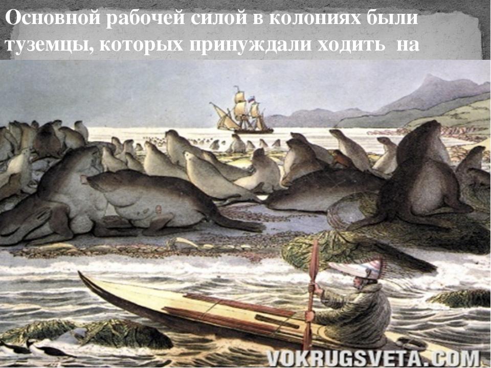 Основной рабочей силой в колониях были туземцы, которых принуждали ходить на...