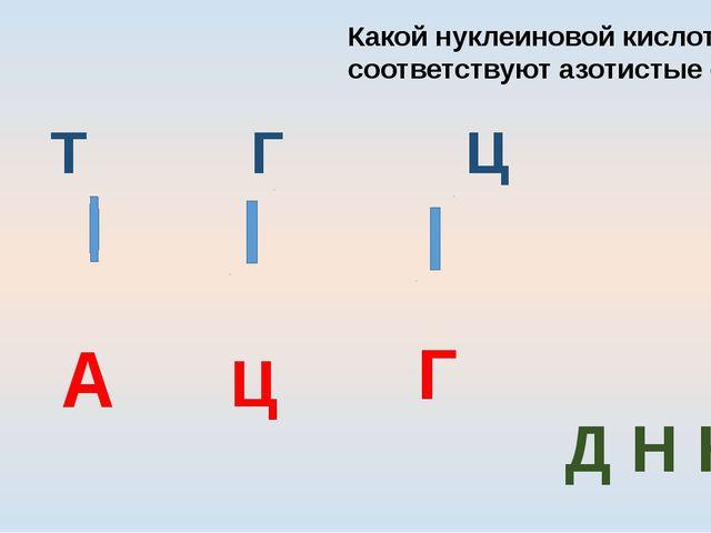 А Т Г Ц Т А Ц Г Какой нуклеиновой кислоте соответствуют азотистые основания Д...