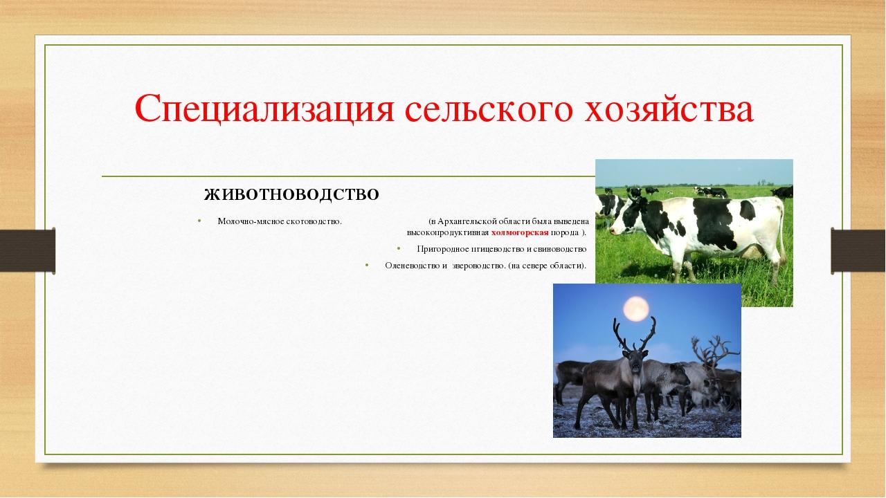 Специализация сельского хозяйства Молочно-мясное скотоводство. (в Архангельск...