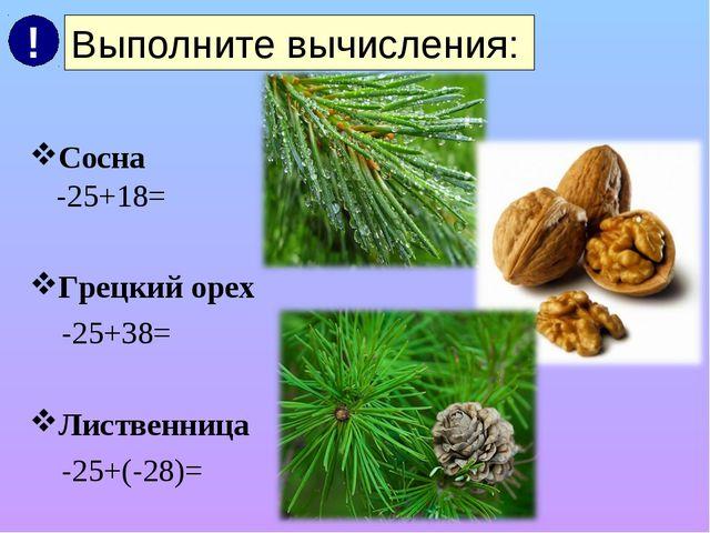 Сосна -25+18= Грецкий орех -25+38= Лиственница -25+(-28)= Выполните вычислен...