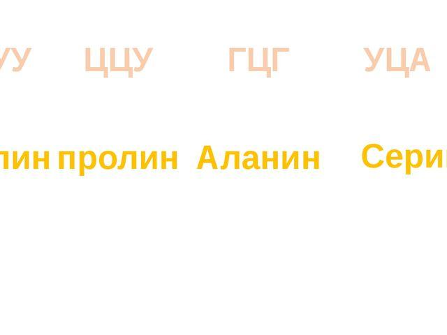 ГУУ валин ЦЦУ пролин ГЦГ Аланин УЦА Серин