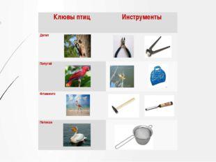 Клювы птиц Инструменты Дятел Попугай Фламинго Пеликан
