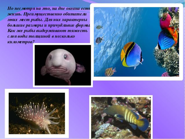 Но несмотря на это, на дне океана есть жизнь. Преимущественно обитатели этих...