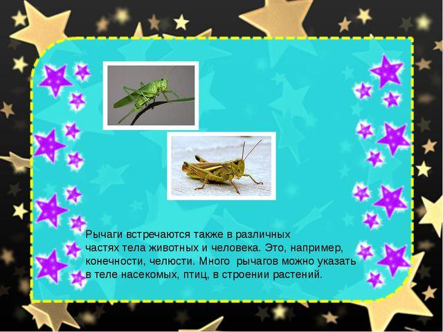 Рычаги встречаются также в различных частях тела животных и человека. Это, на...