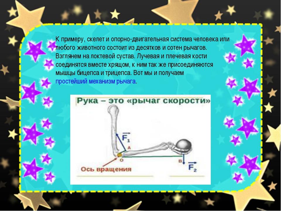 К примеру, скелет и опорно-двигательная система человека или любого животного...