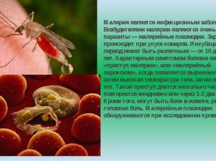 Малярия является инфекционным заболеванием. Возбудителями малярии являются оч