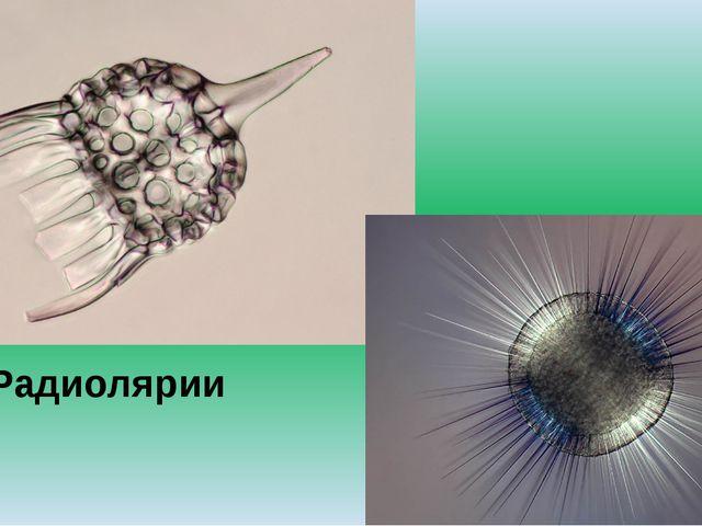 Радиолярии