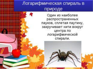 Один из наиболее распространенных пауков, сплетая паутину, закручивает нити в