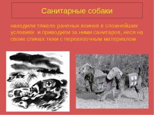 Санитарные собаки находили тяжело раненых воинов в сложнейших условиях и прив
