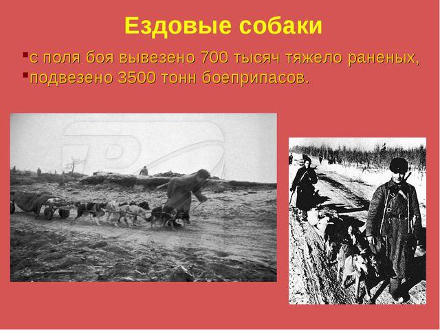 Ездовые собаки с поля боя вывезено 700 тысяч тяжело раненых, подвезено 3500 т...