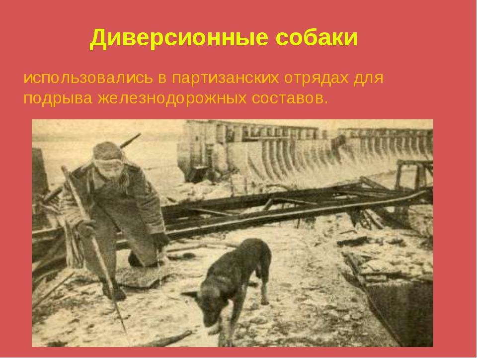 Диверсионные собаки использовались в партизанских отрядах для подрыва железно...