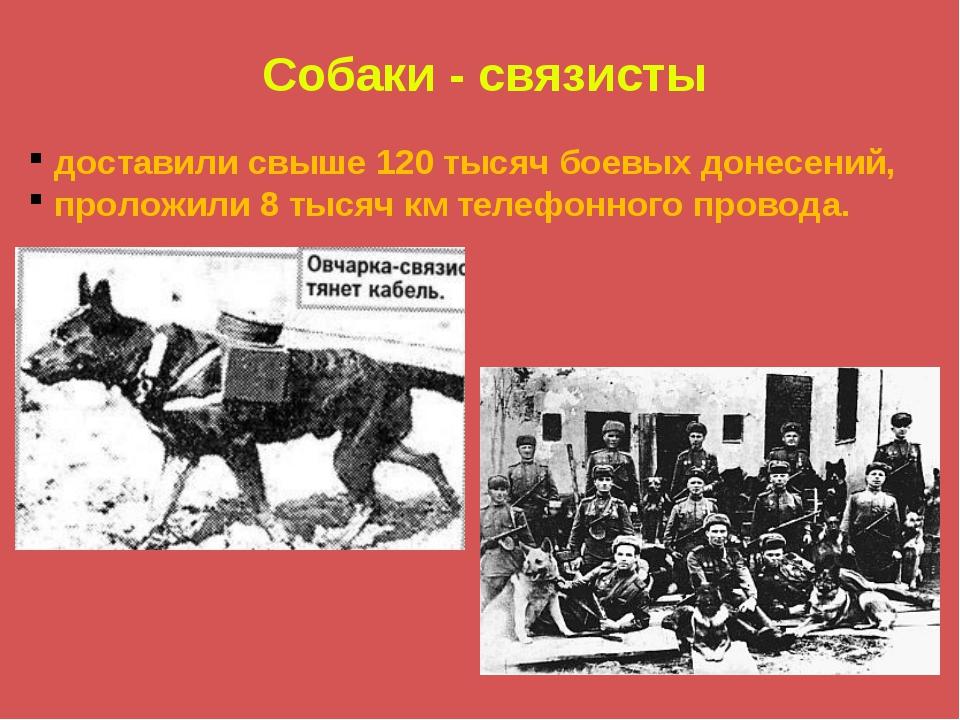 Собаки - связисты доставили свыше 120 тысяч боевых донесений, проложили 8 тыс...
