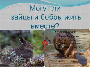 Могут ли зайцы и бобры жить вместе? ?