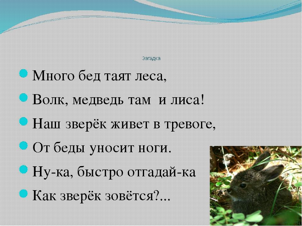 Загадка Много бед таят леса, Волк, медведь там и лиса! Наш зверёк живет в тр...