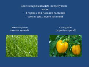 Для эксперимента нам потребуется: земля 4 горшка для посадки растений семена
