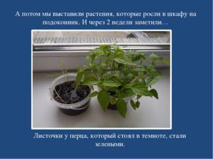 А потом мы выставили растения, которые росли в шкафу на подоконник. И через 2