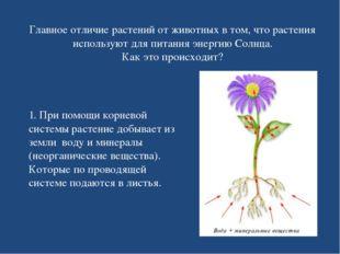 Главное отличие растений от животных в том, что растения используют для питан