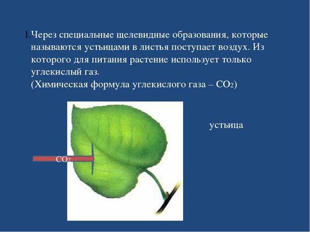 Через специальные щелевидные образования, которые называются устьицами в лист...