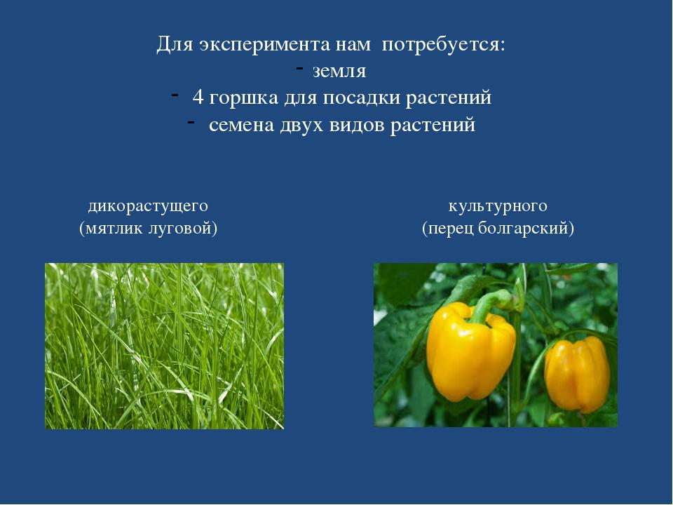 Для эксперимента нам потребуется: земля 4 горшка для посадки растений семена...