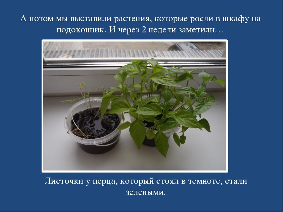 А потом мы выставили растения, которые росли в шкафу на подоконник. И через 2...