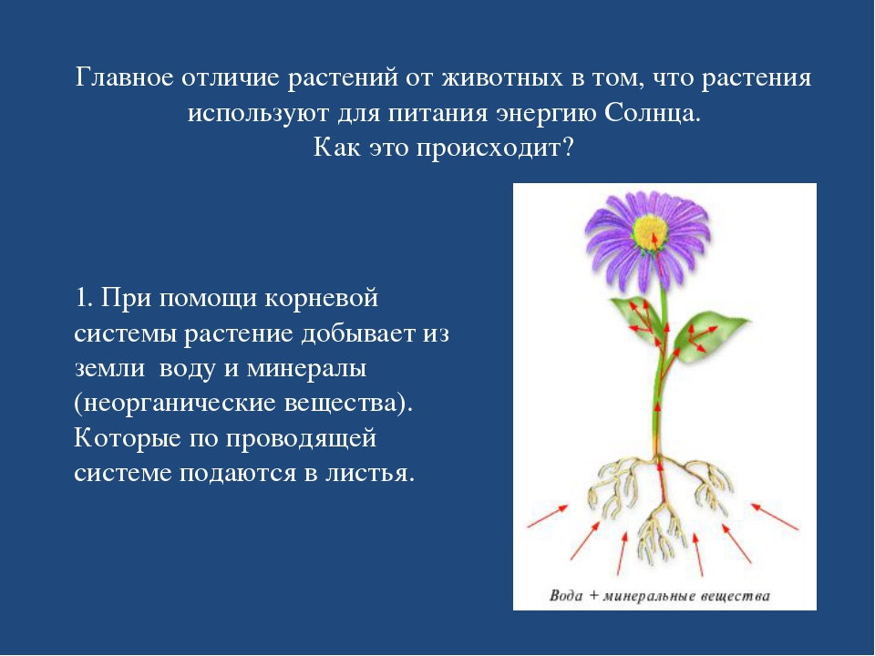 Главное отличие растений от животных в том, что растения используют для питан...