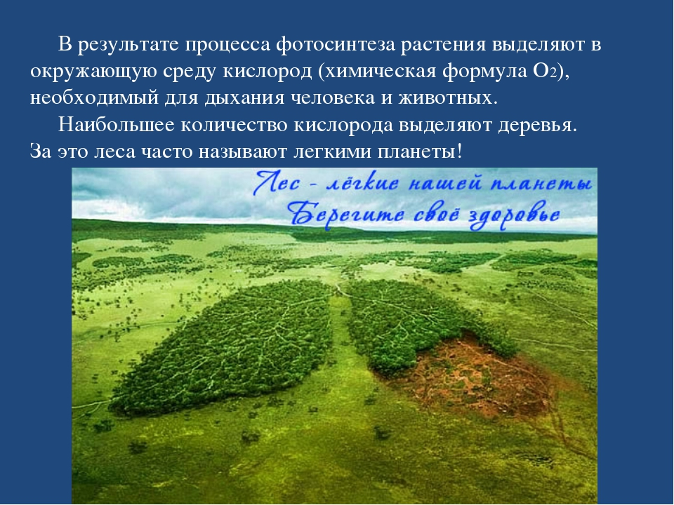 В результате процесса фотосинтеза растения выделяют в окружающую среду кисло...