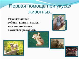 Первая помощь при укусах животных. Укус домашней собаки, кошки, крысы или мыш