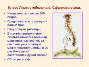 Класс Листостебельные. Сфагновые мхи. Численность – около 300 видов; Представ