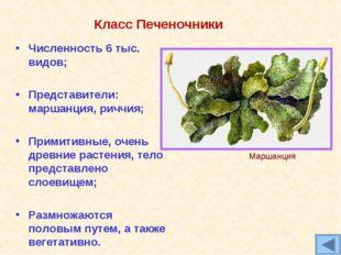 Класс Печеночники Численность 6 тыс. видов; Представители: маршанция, риччия;