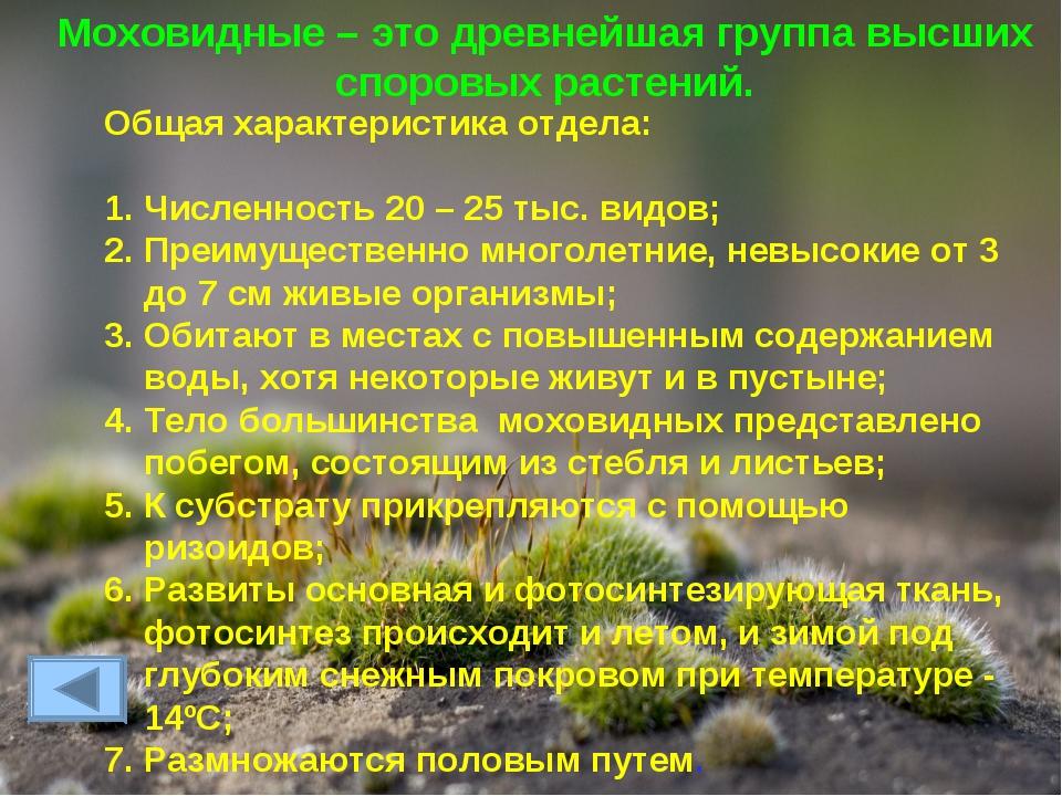 Моховидные – это древнейшая группа высших споровых растений. Общая характерис...