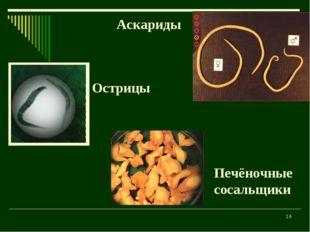 * Аскариды Острицы Печёночные сосальщики
