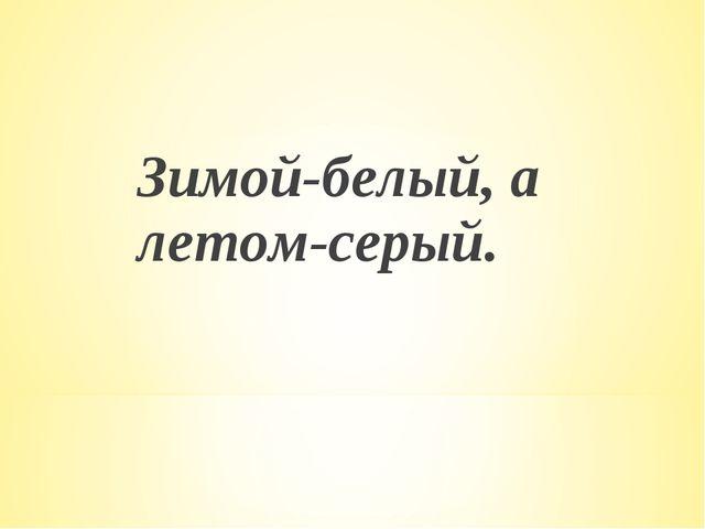 Зимой-белый, а летом-серый.