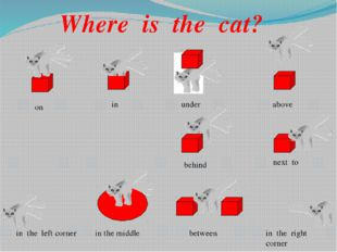 Where is the cat? on in under above behind next to in the left corner in the